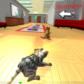 kedi yarışı