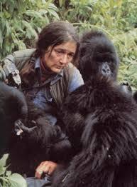 Dian Fossey oyunu